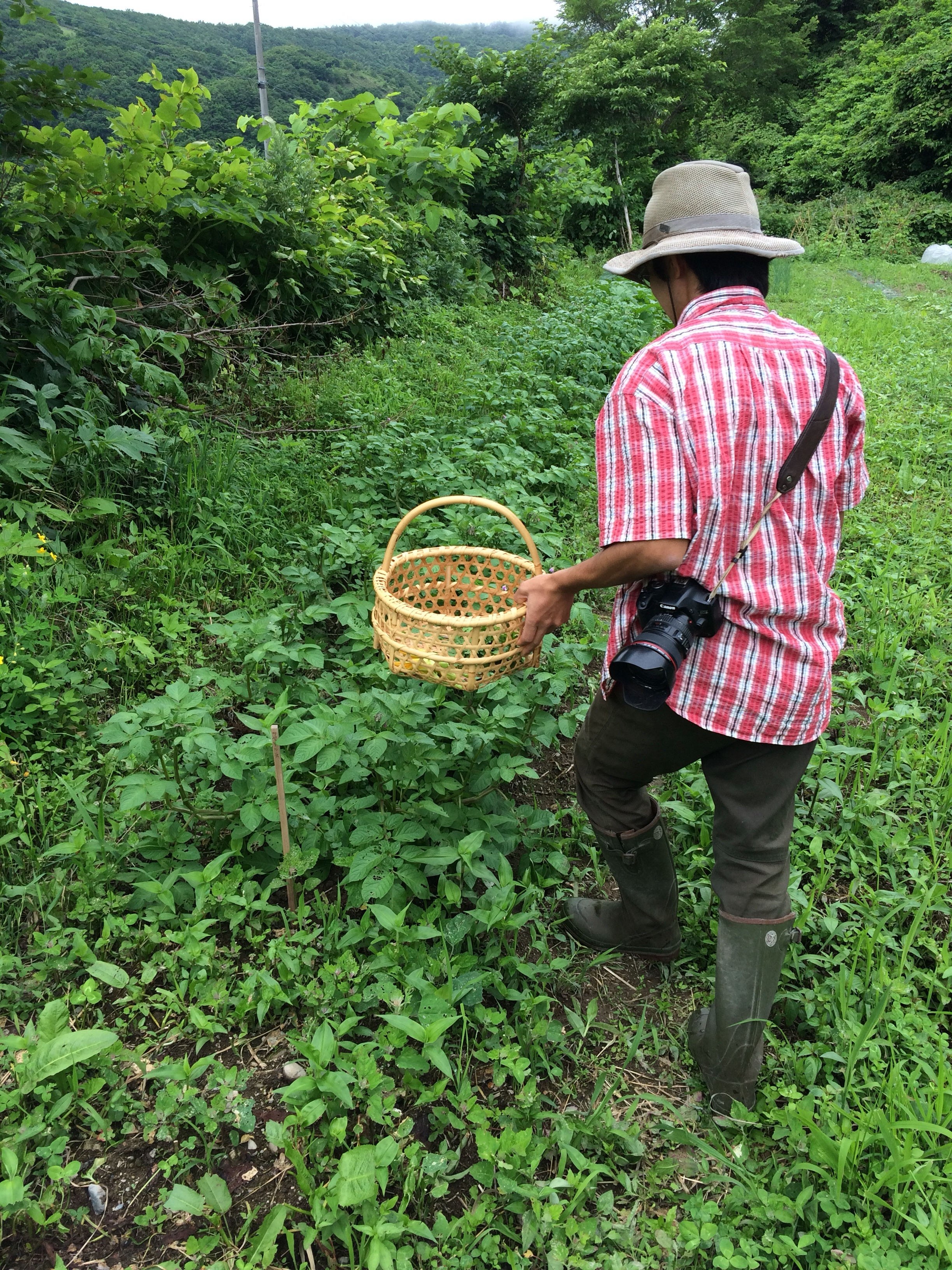自然栽培の畑を見学