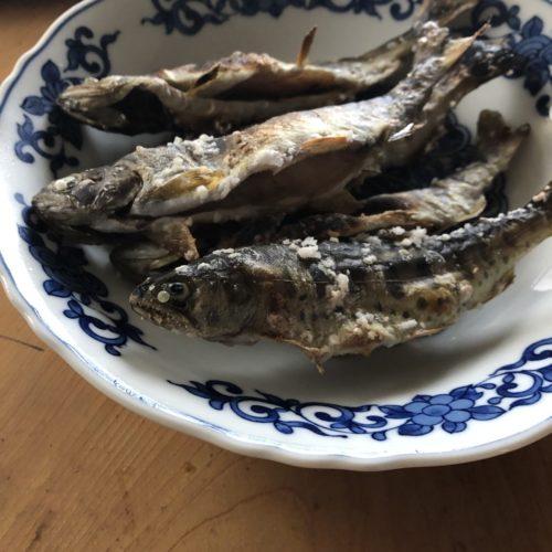 島牧の天然塩で塩焼きにした。釣りたての魚を食べたいと言う夢が一つ叶った