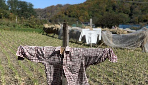 31歳の男が「田舎へ移住してみた」ブログ