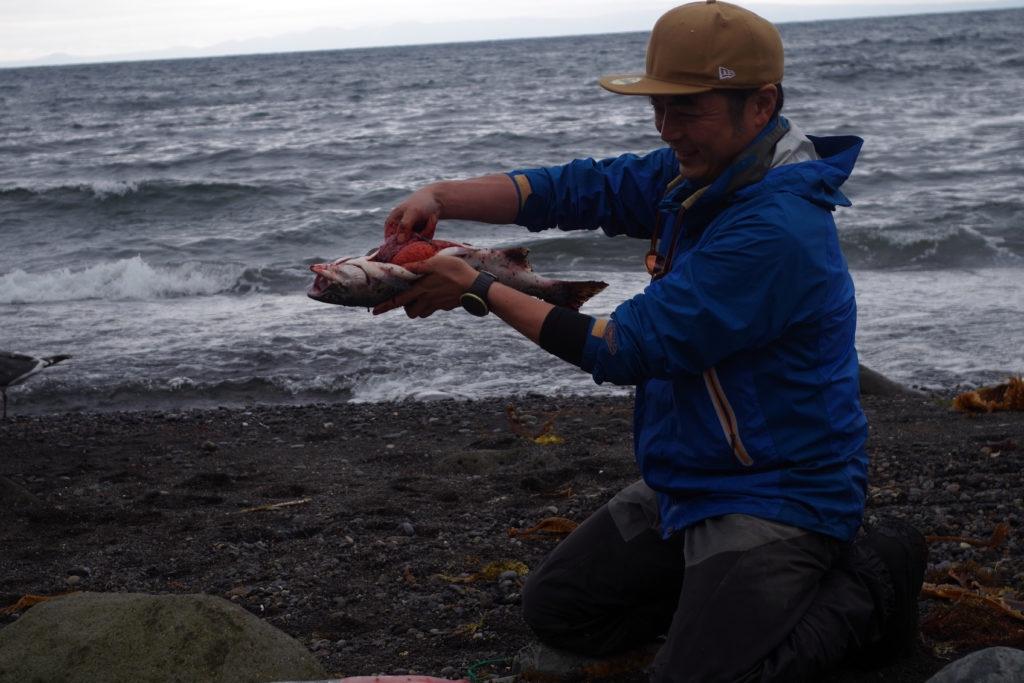 カラフトマス 釣り