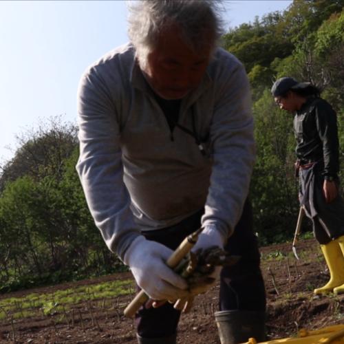 北海道産路地栽培アスパラガス