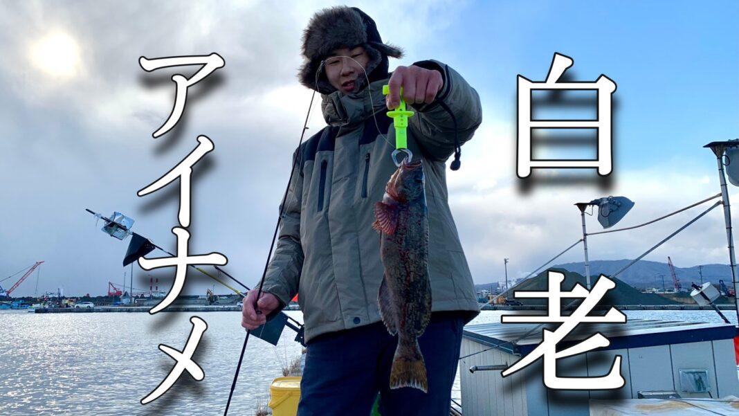 【穴釣り】北海道白老港でアイナメ(アブラコ)釣り!!